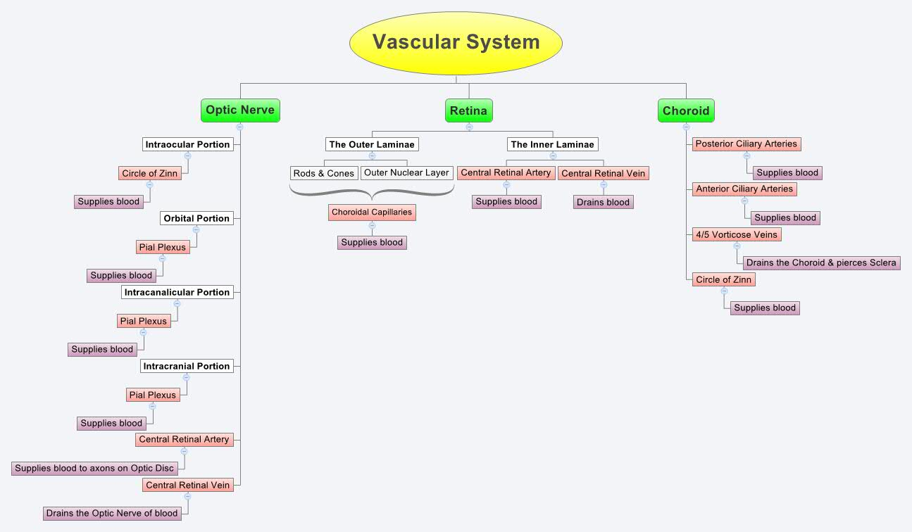 Overview of the Vascular System  Johns Hopkins Medicine