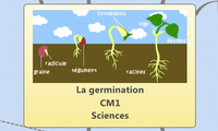 La germination