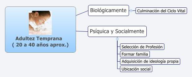 Adultez Temprana     ( 20 a 40 años aprox.)