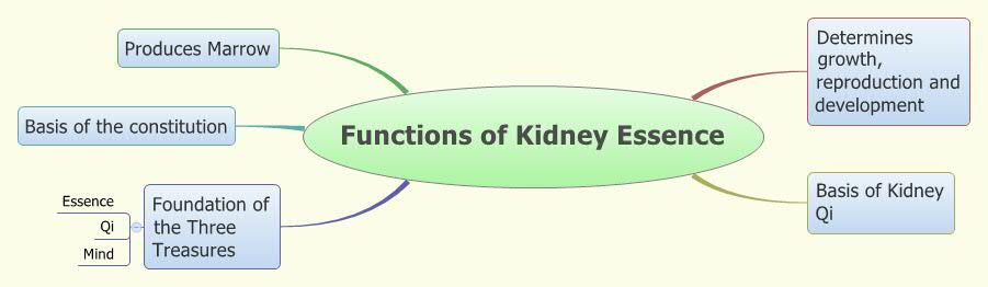 Functions Of Kidney Essence Xmind Online Library