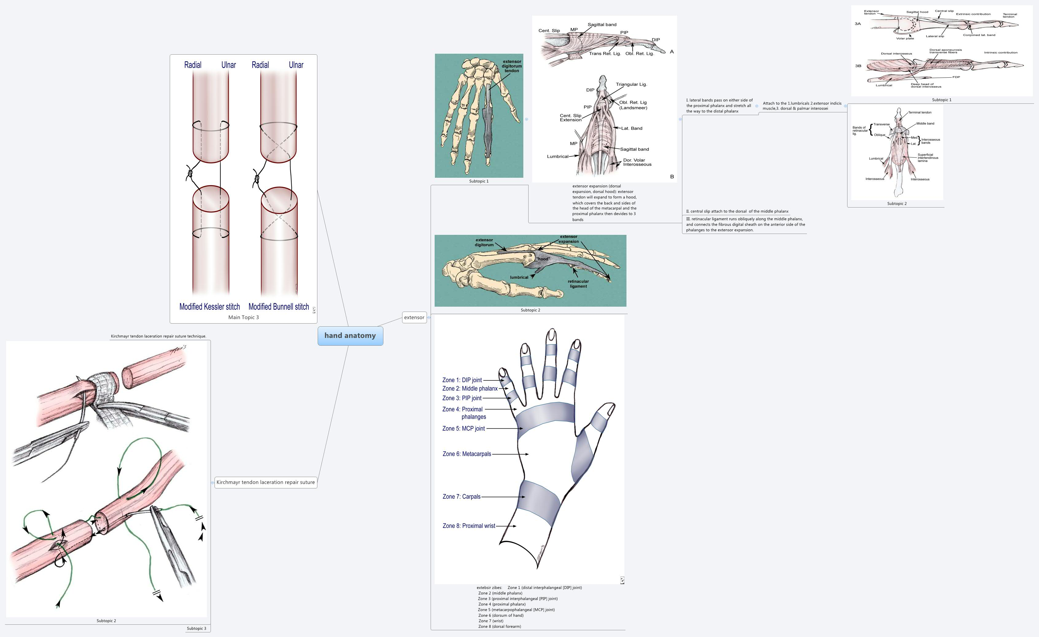 hand anatomy -- XMind Online Library