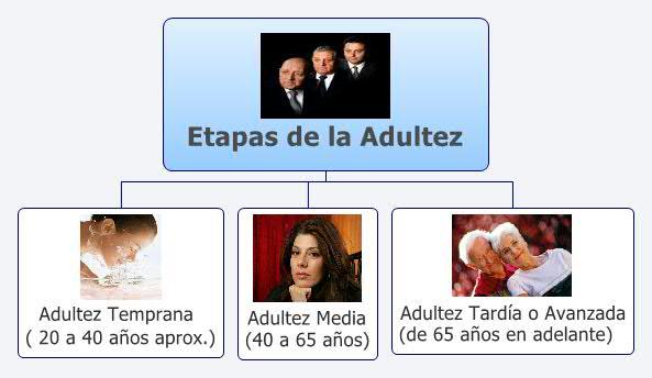 Etapas de la Adultez